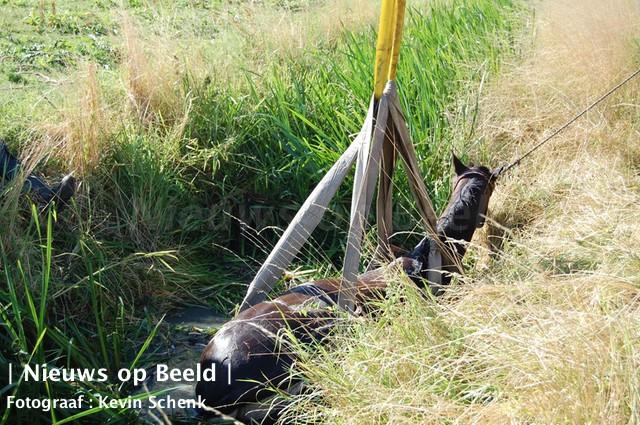 Dierenarts heeft paard laten inslapen nadat het mishandeld was in weiland Geerenweg Eemnes; politie zoekt getuigen