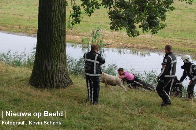 foto-kevin-schenk-hvdier-essendijk-rhoon-15-08-13-3.jpg