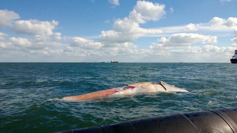15-09-13-walvis.jpg