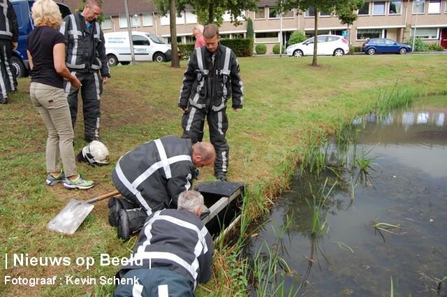 10-09-13-JanvAlmondestraat-Poortugaal-Waterkip2.jpg
