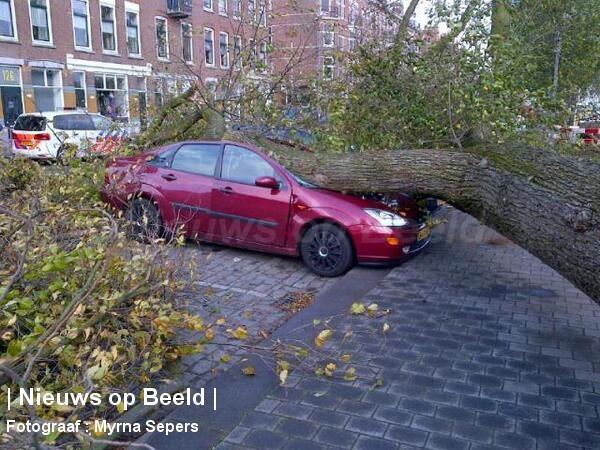 28-10-13-Noordereiland-Rotterdam-Boom1