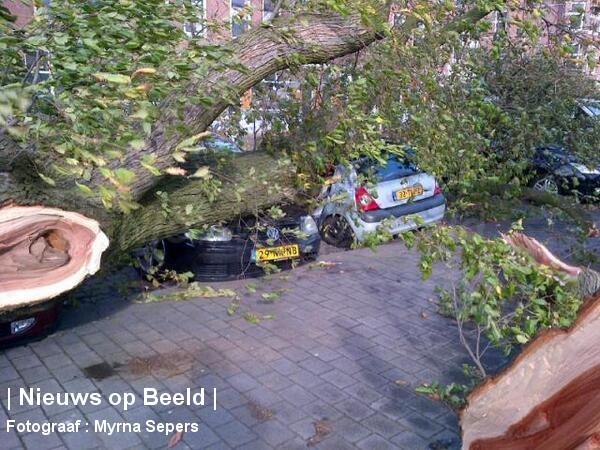 28-10-13-Noordereiland-Rotterdam-Boom2