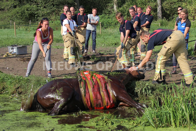 brandweer redt paard uit sloot bij manege bermweg capelle