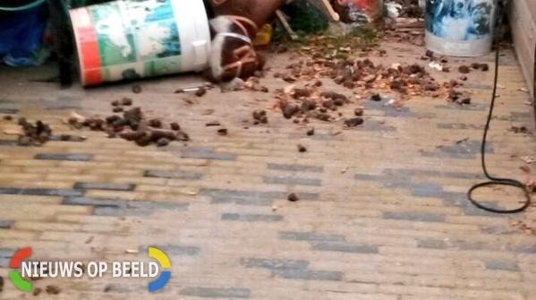 Hondenpoep In Tuin : Bewoner heeft stront aan de knikker na melding stankoverlast