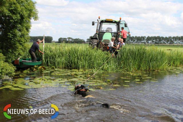 Koe uit sloot gered door brandweer Ofwegen Woubrugge | Nieuws ... - Nieuws op Beeld