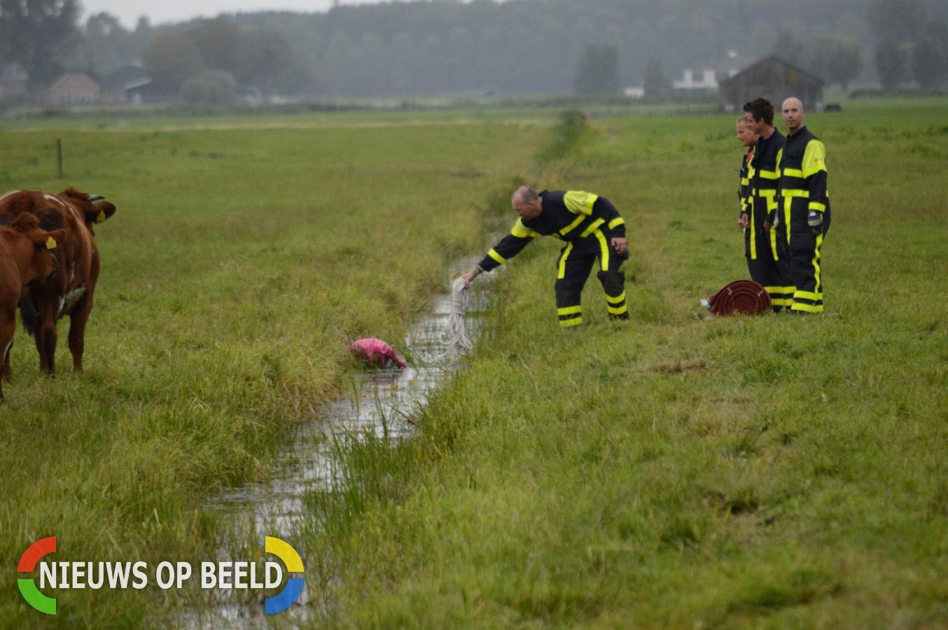 Dier ter water blijkt ballon te zijn Oude Leedeweg Pijnacker
