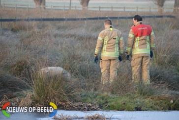 Brandweer red schaap uit het water Bergschenhoekseweg Bergschenhoek