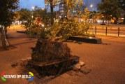 Boom valt met wortel en al om Hobbemaplein Den Haag