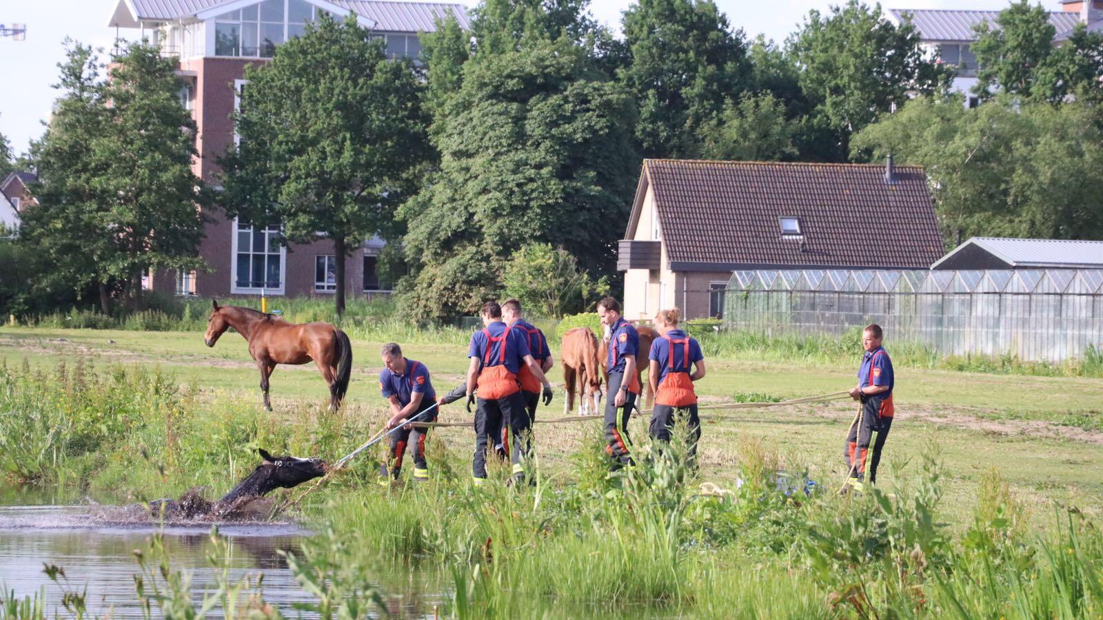 Brandweer haalt paard uit sloot Houtsingel Gouda