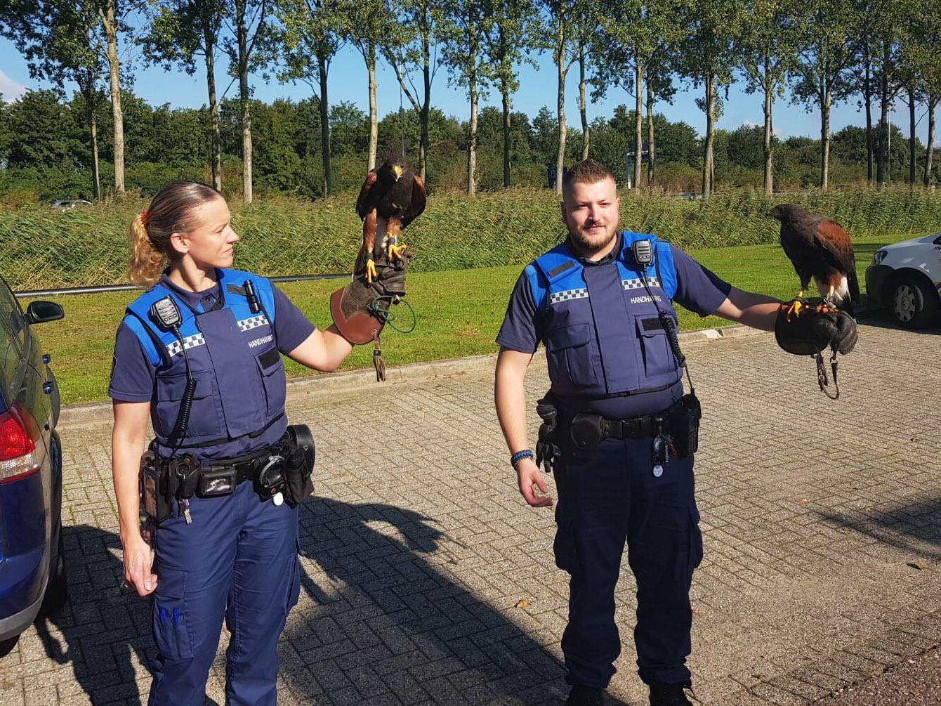 Valkenier jaagt op konijnen Hoofdweg Capelle aan den IJssel