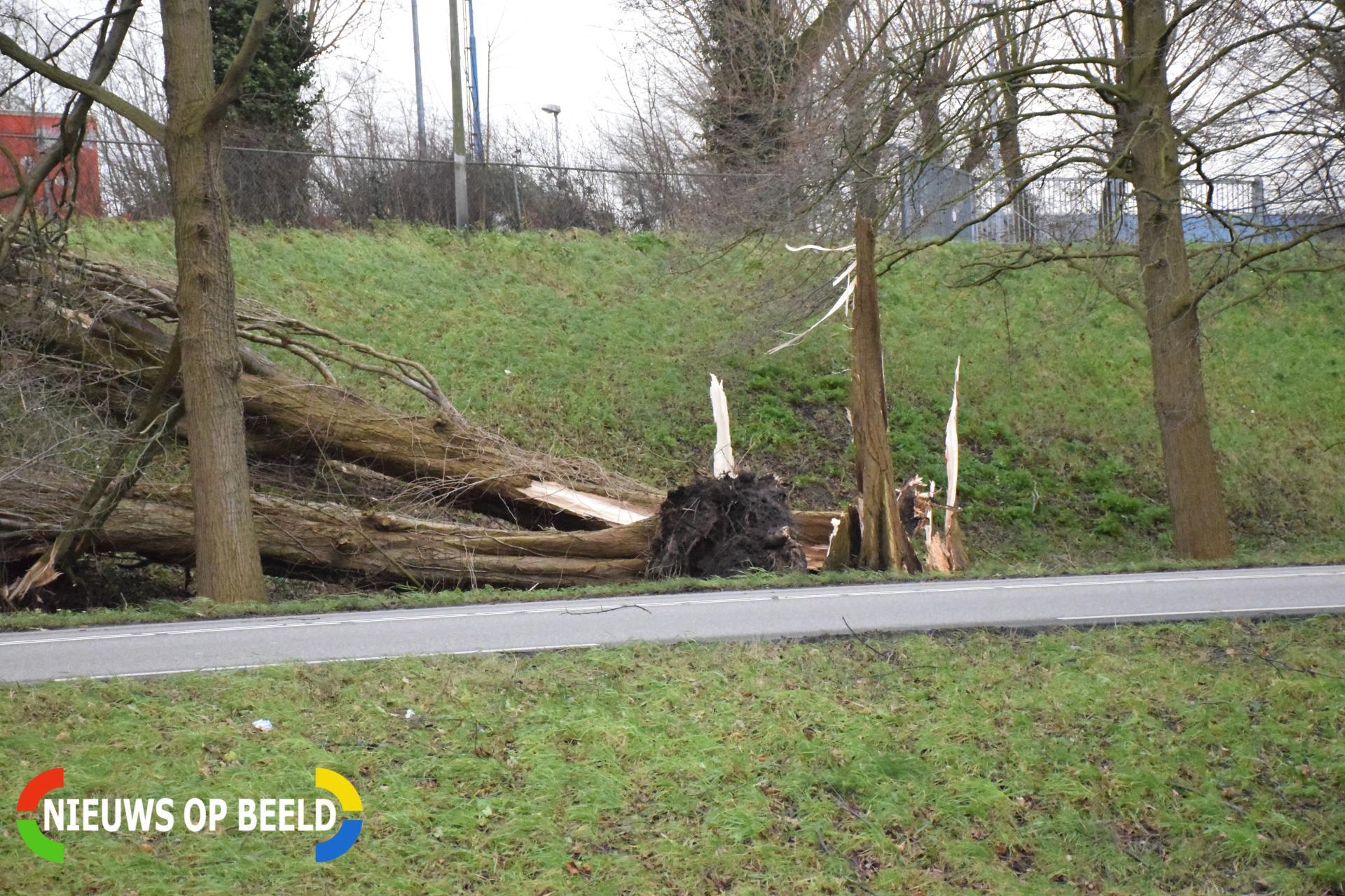 Boom omgewaaid tegen huis Hoge Zeedijk Gouda