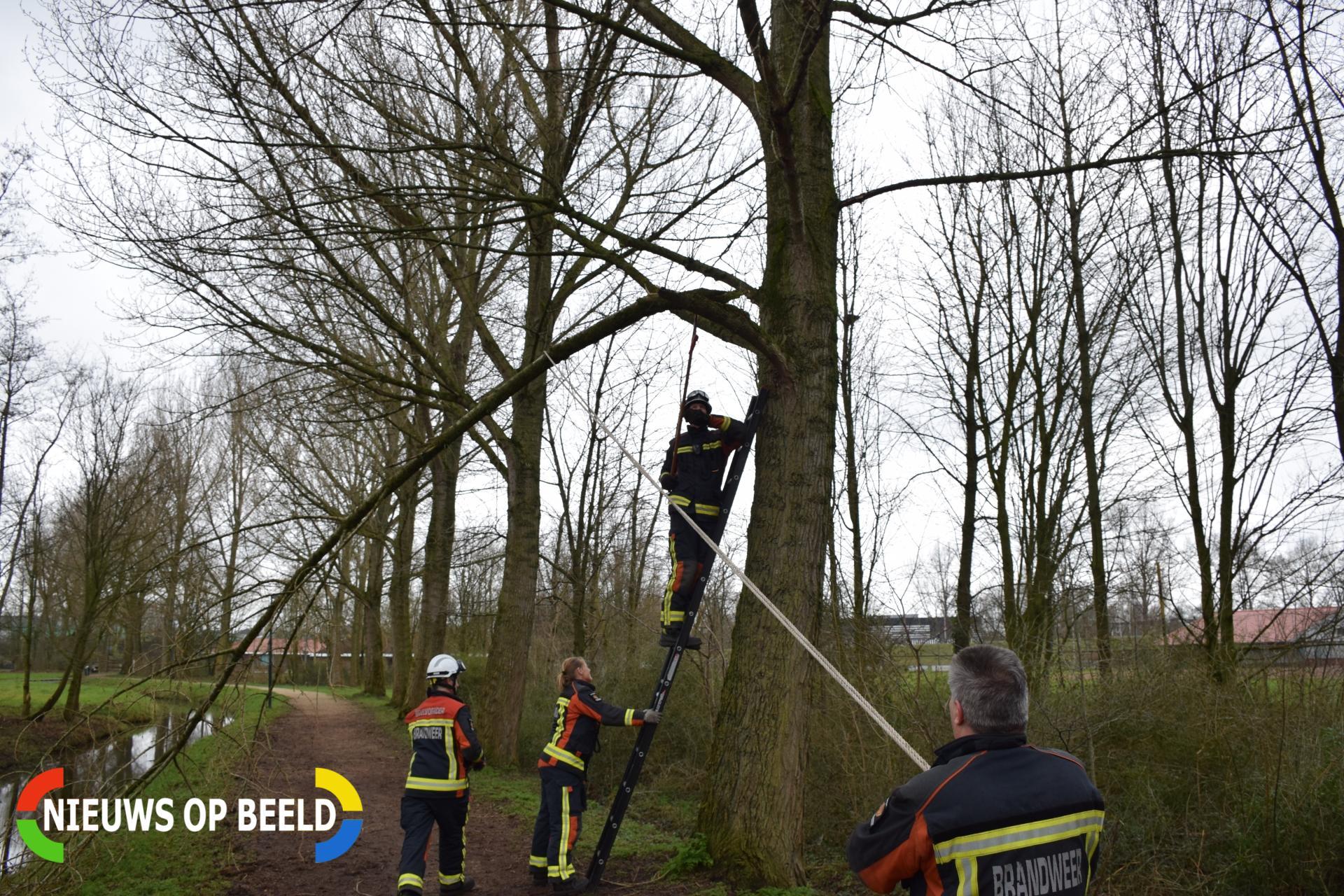 Brandweer verwijdert gevaarlijk hangende tak Jeu de Boulespad Gouda