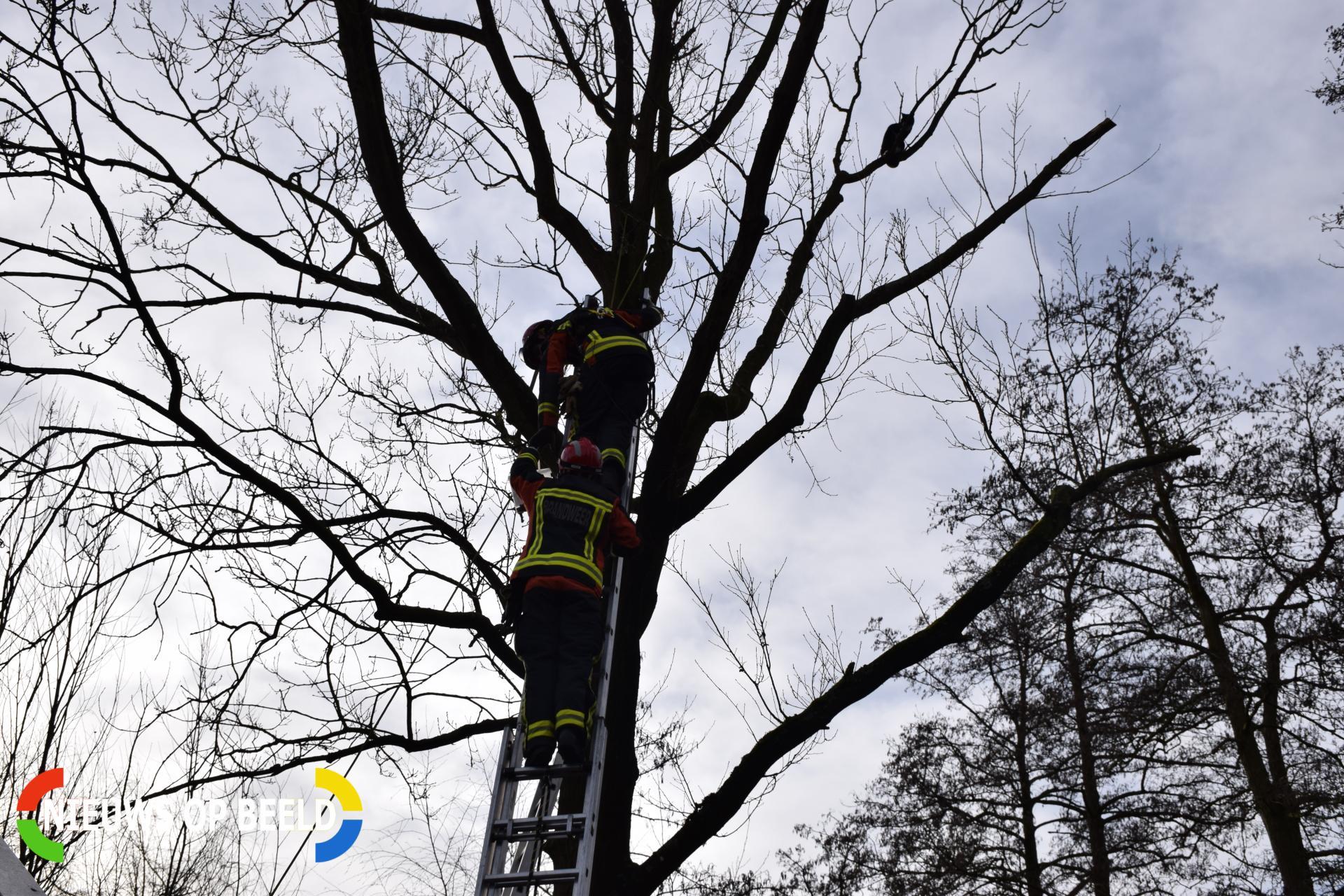 Kat ontsnapt aan reddingsactie brandweer Ridder van Catsweg Gouda