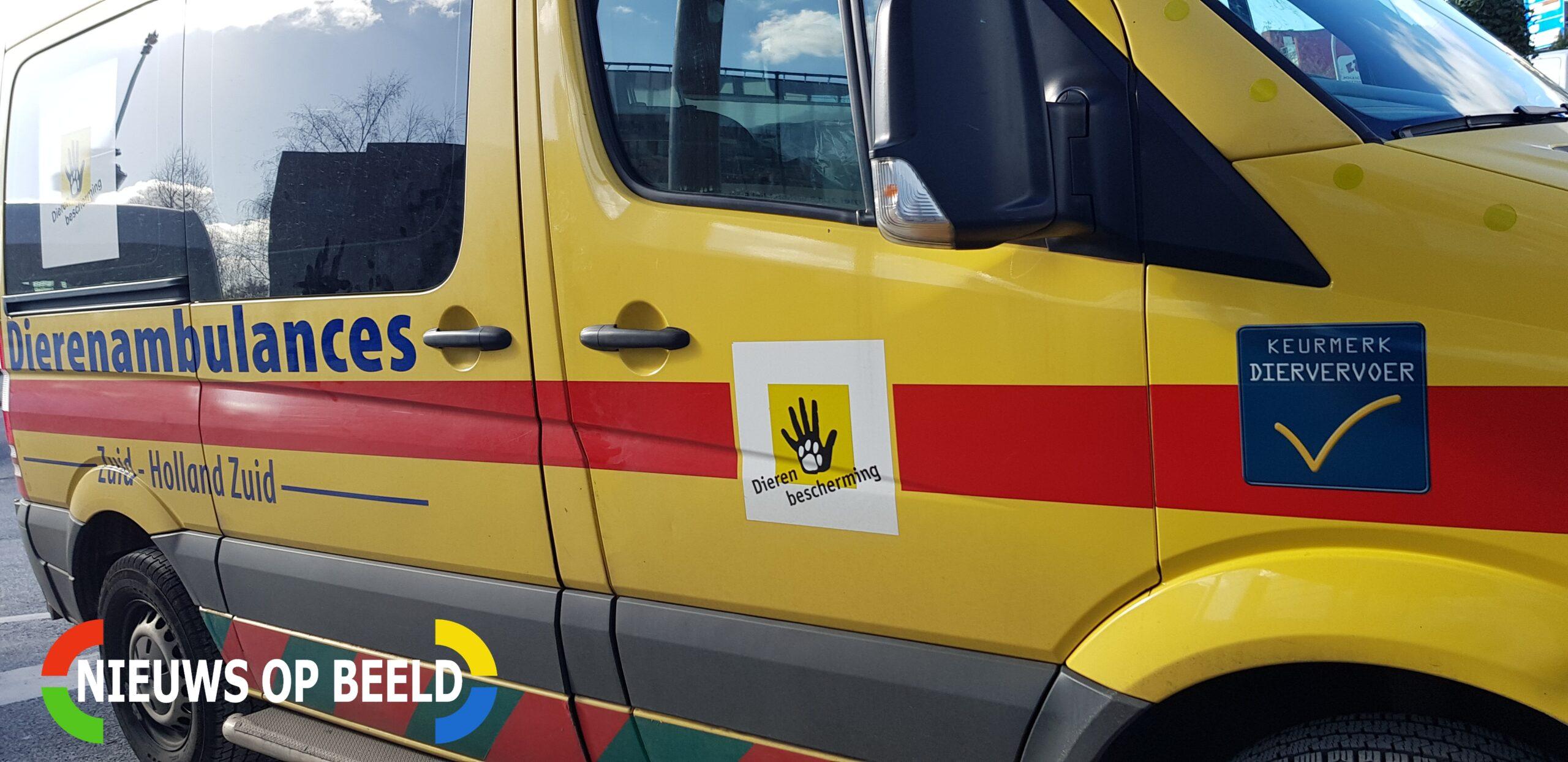 Toekomst Dierenambulance Rotterdam onzeker door tekort vrijwilligers