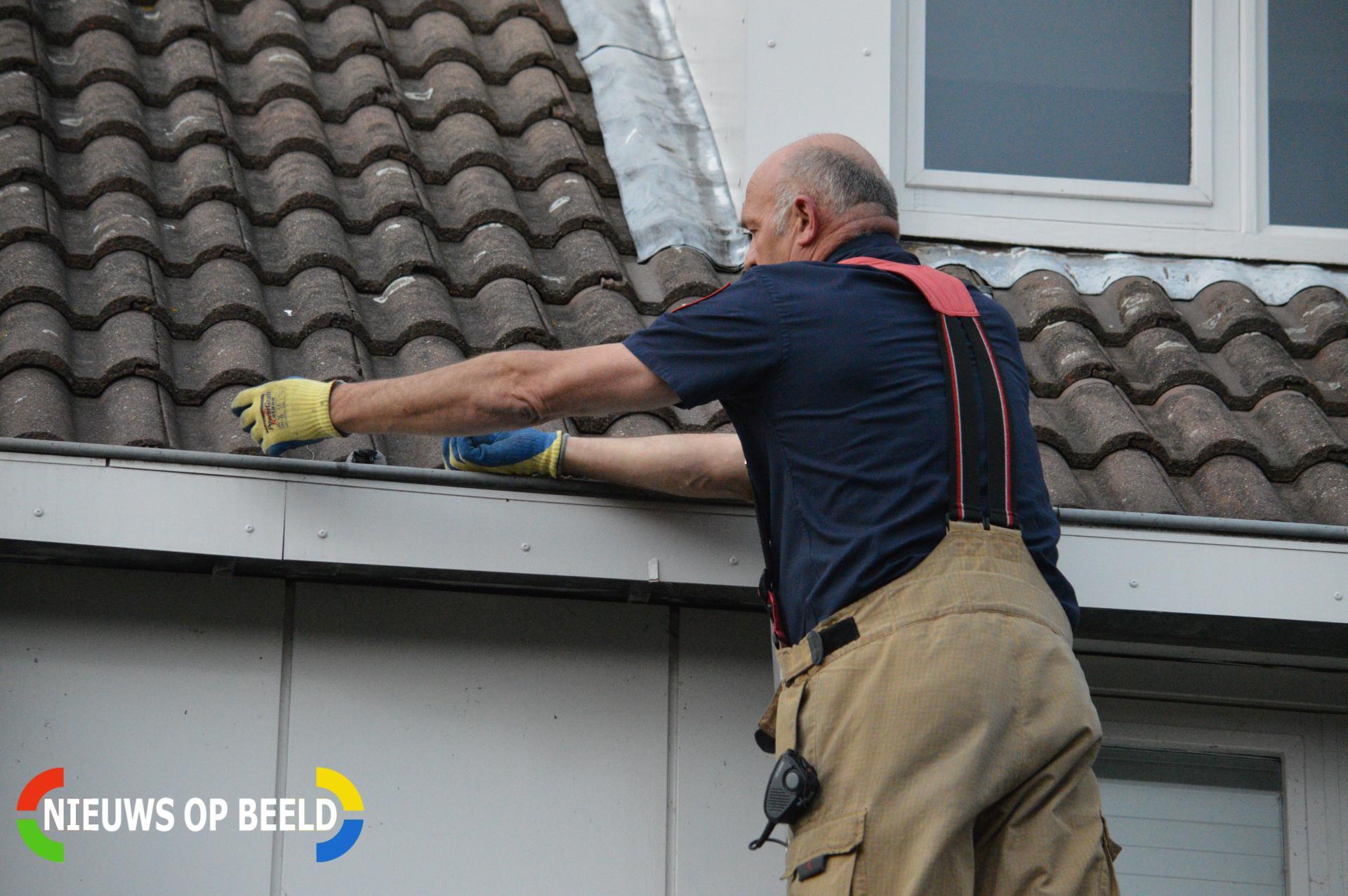 Brandweer redt vogel uit dakgoot Kroeskarper Bergschenhoek
