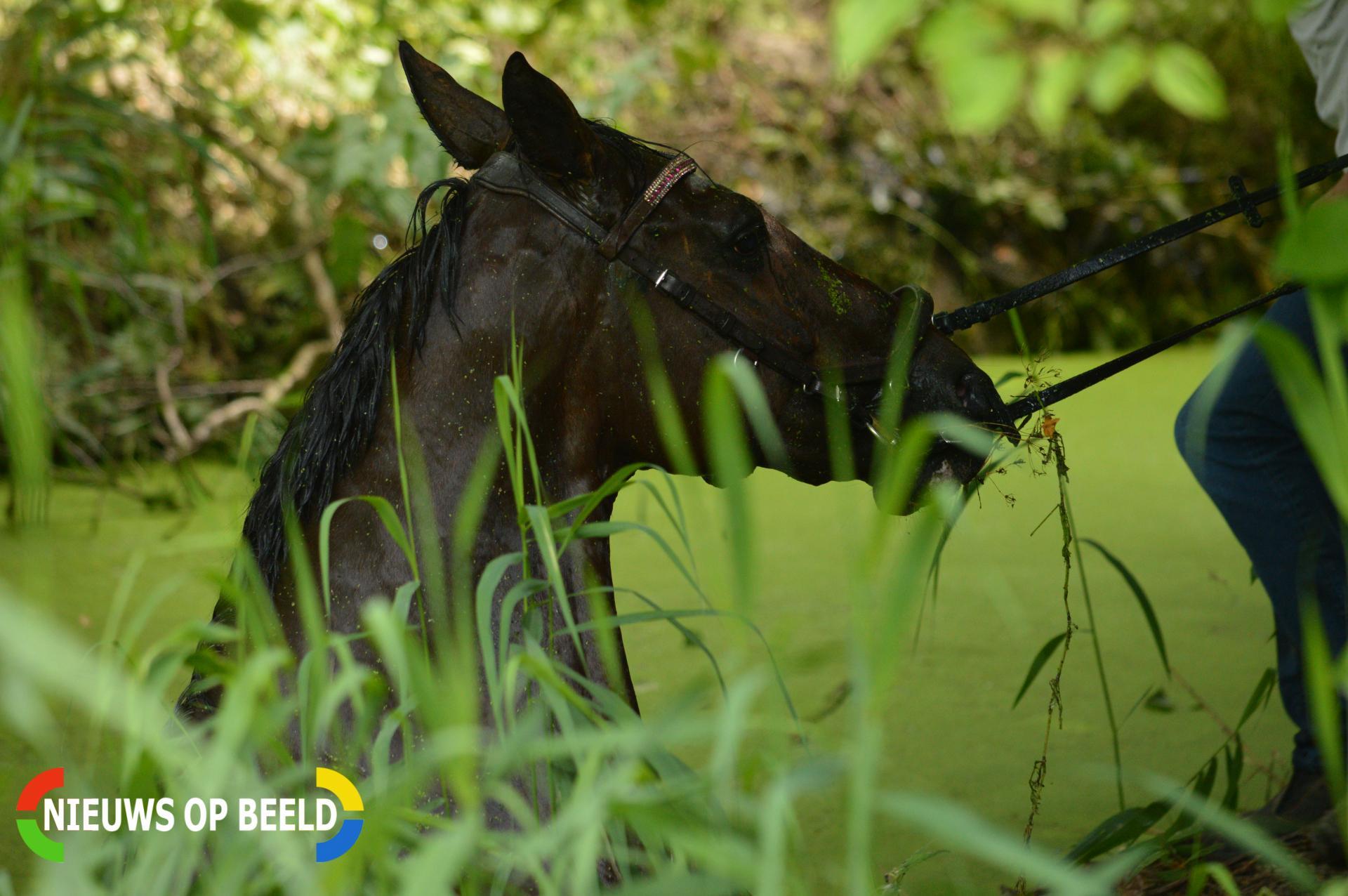 Paard en ruiter te water Kromme Tochtweg Bergschenhoek
