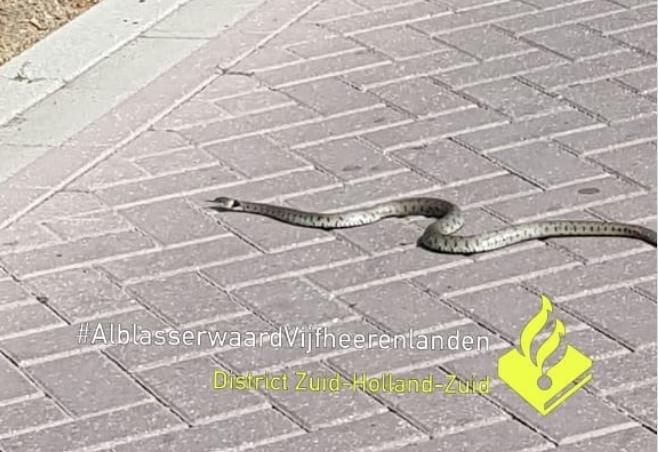 Politie Leerdam op zoek naar eigenaar slang