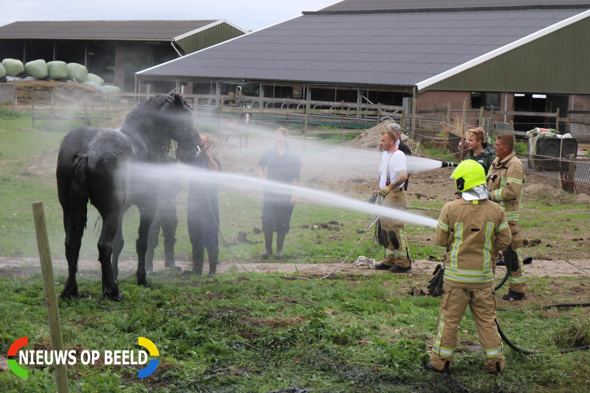 Paard uit de sloot gered Drieëndijk Heenvliet