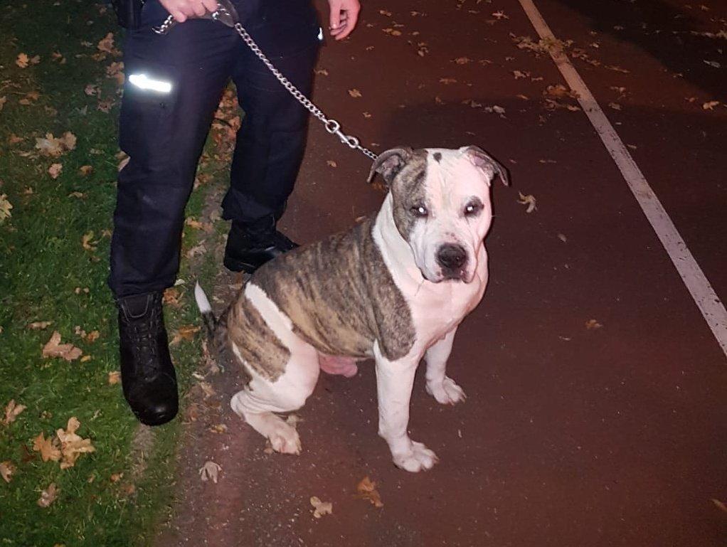 Hond achtergelaten bij asiel Rotterdam-West