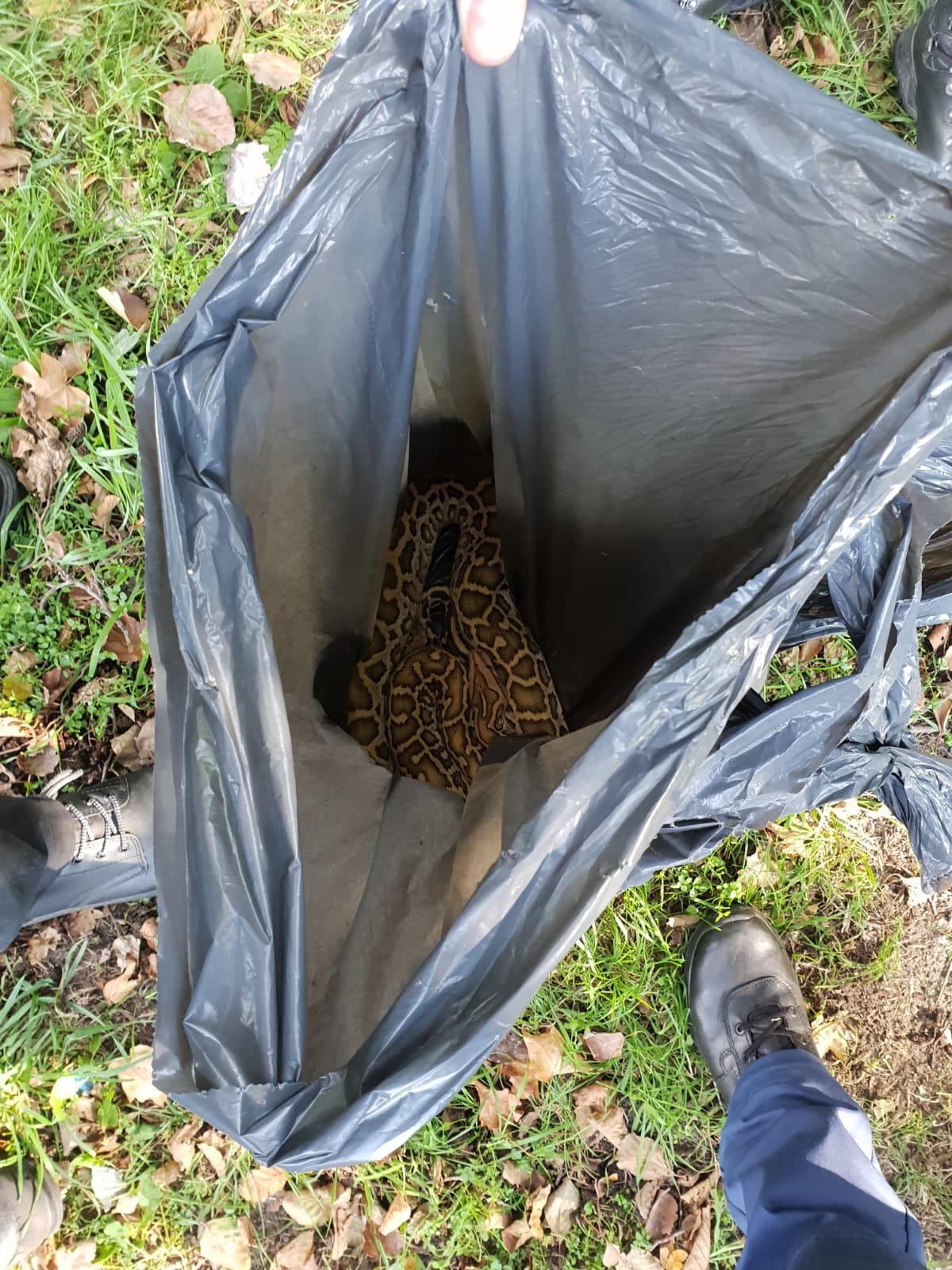 Tijgerpython gedumpt in vuilniszak Poolvosweg Capelle aan den IJssel