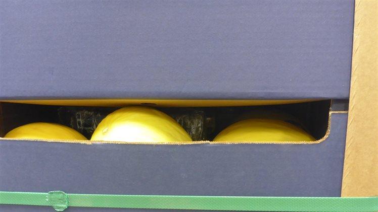 Douane vindt 2500 kilo cocaïne tussen meloenen op de Maasvlakte Rotterdam