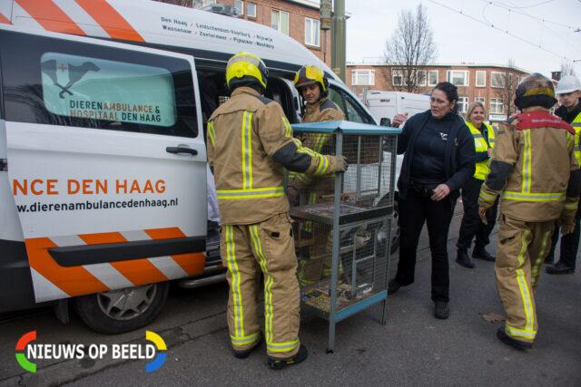 Brandweermannen helpen met het inladen van de vogelkooien in de dierenambulance