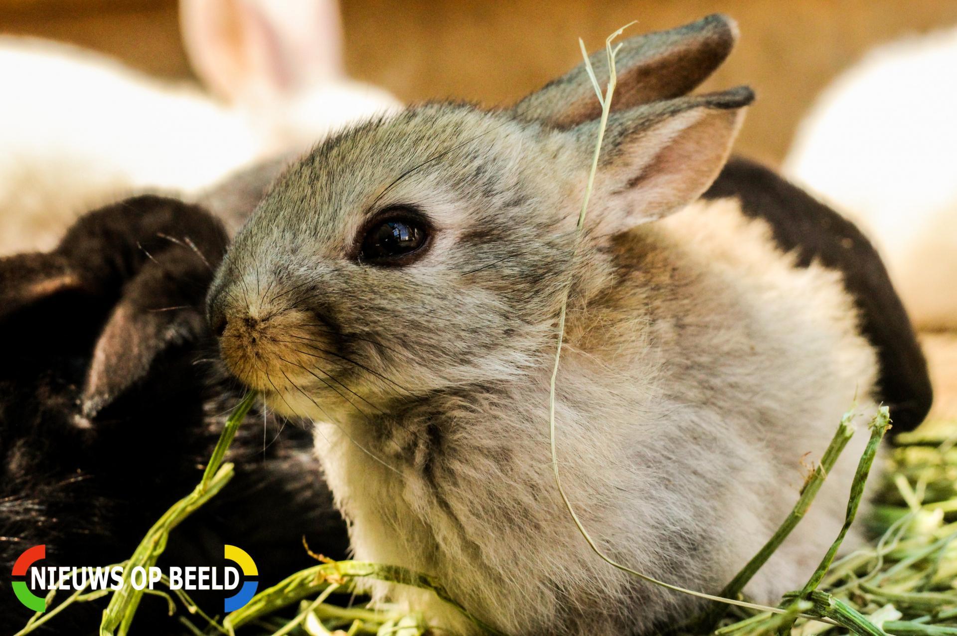 Ruim 200 verwaarloosde konijnen in beslag genomen bij fokker Centrum Ede