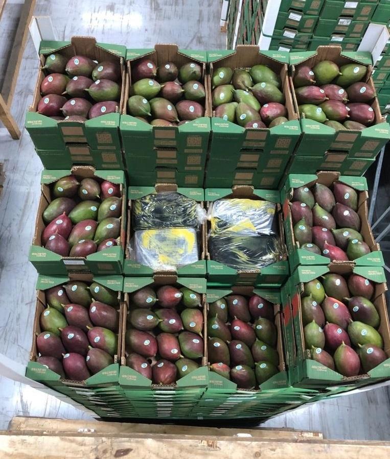 Douanier aangehouden na vondst 1500 kilo Cocaïne tussen mango's in Haven Rotterdam
