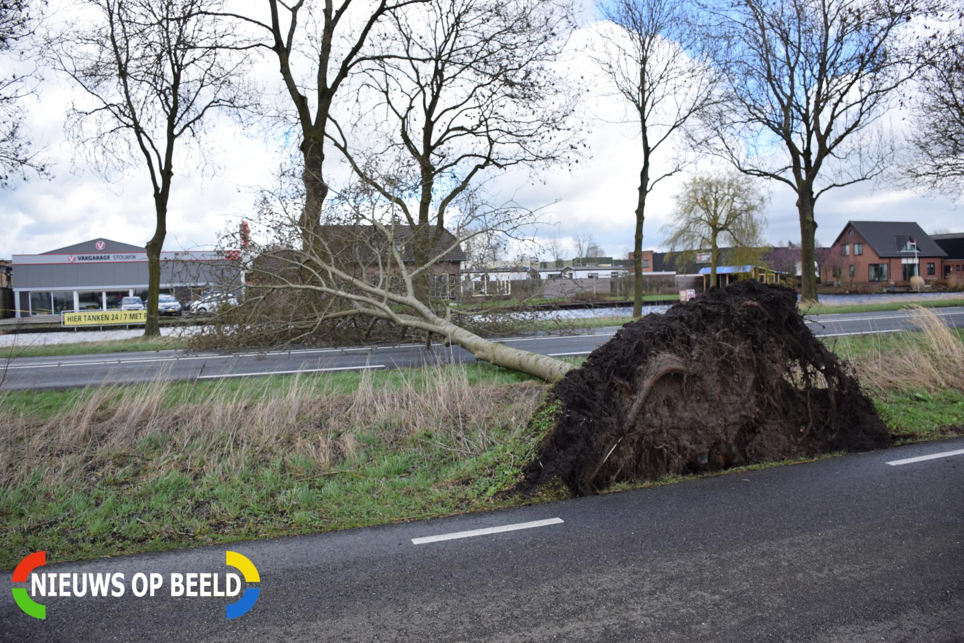 Omgevallen boom versperd weg Schoonhovenseweg – N207 Stolwijk