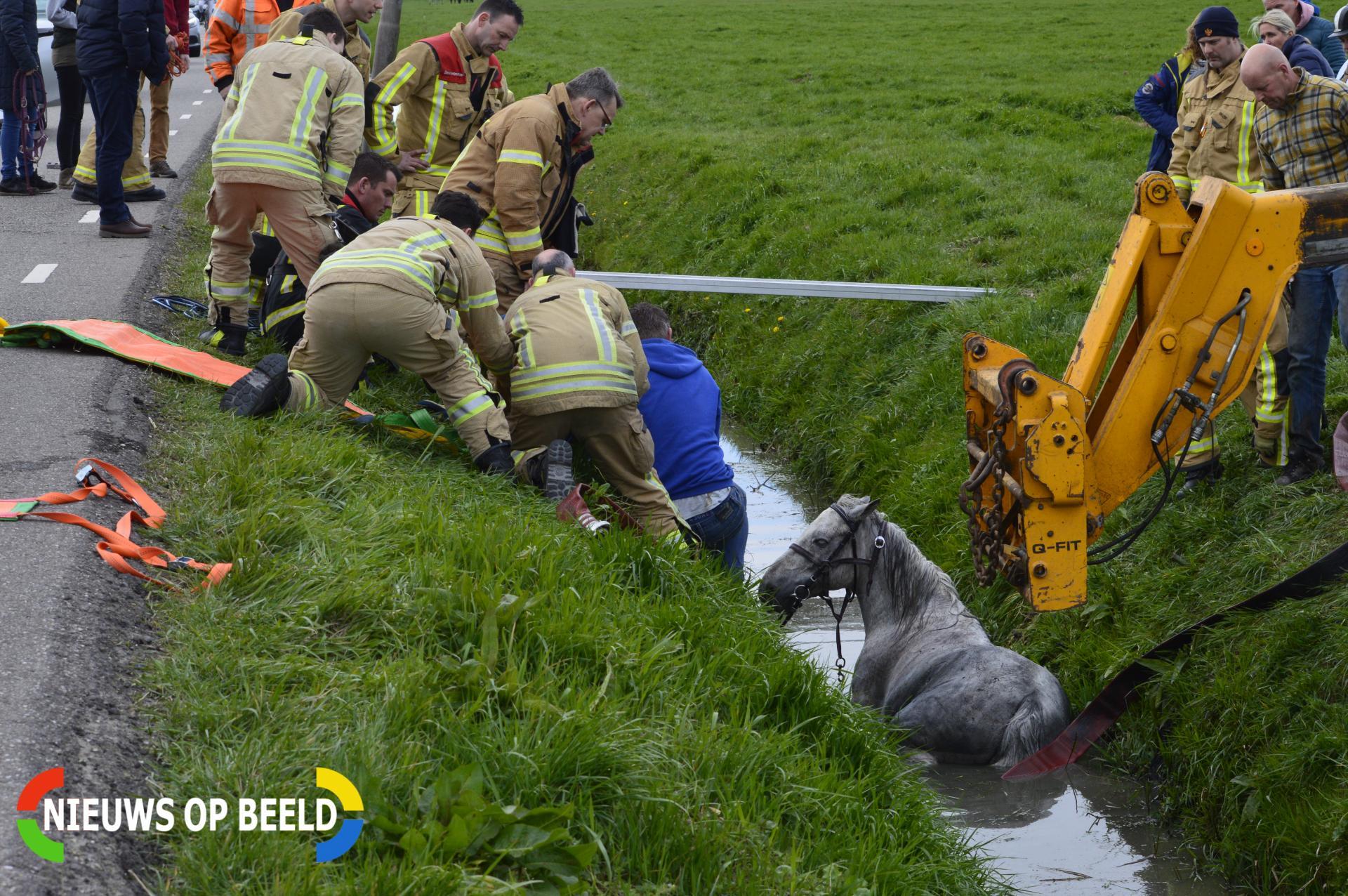 Brandweer bevrijdt paard uit sloot Bovenmolenweg Pijnacker