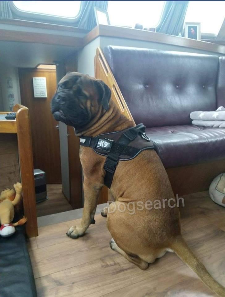 Oorlogsveteraan uit Numansdorp mist zijn hond Bam Bam