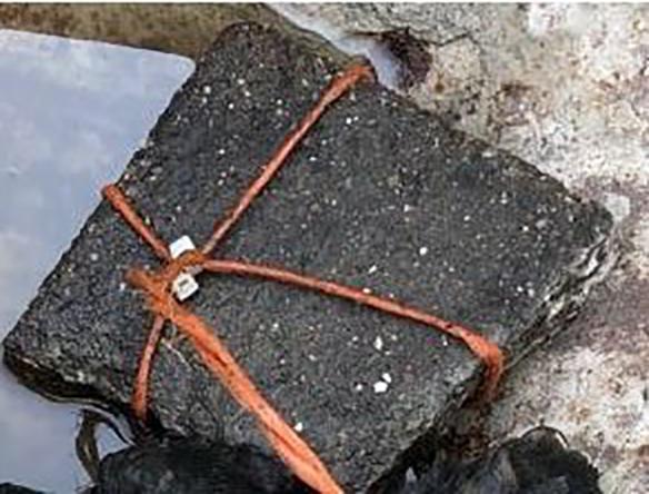 Dierenambulance doet gruwelijke ontdekking in Hazerswoude-Rijndijk