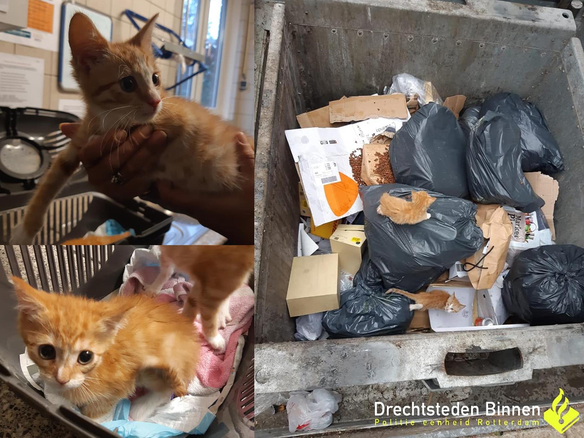 Vier jonge katjes gedumpt in afvalcontainer Dordrecht