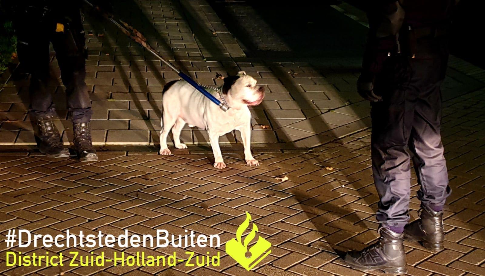 Hond hapt naar oppas Fazantplein Sliedrecht
