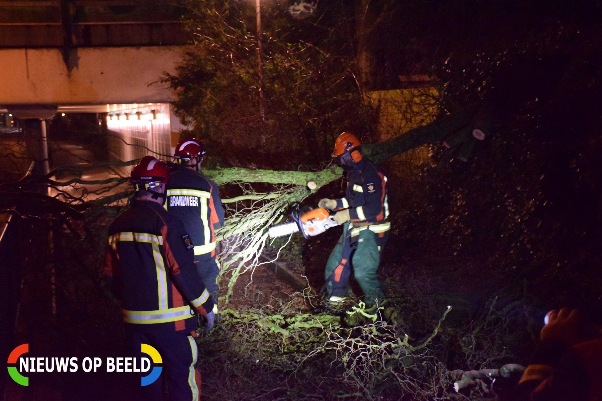 Voorbijgangers vinden omgeknakte boom op fietspad Zwarteweg Gouda