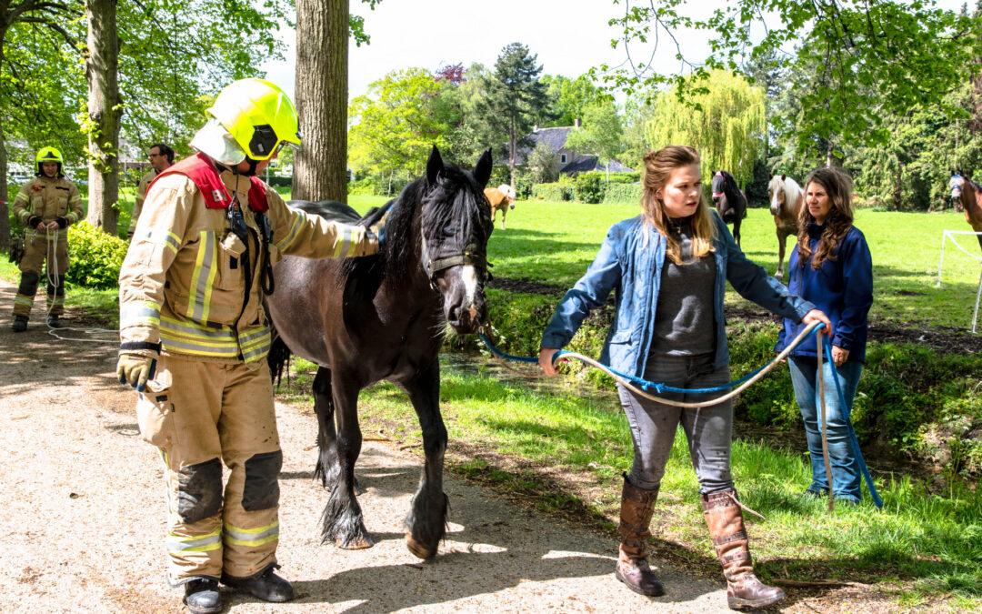 Brandweer haalt paard uit de sloot Dorpsdijk Rhoon