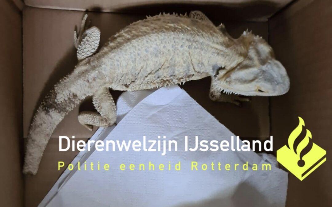 Baardagaam aangetroffen bij bushalte Operlaan Capelle aan den IJssel