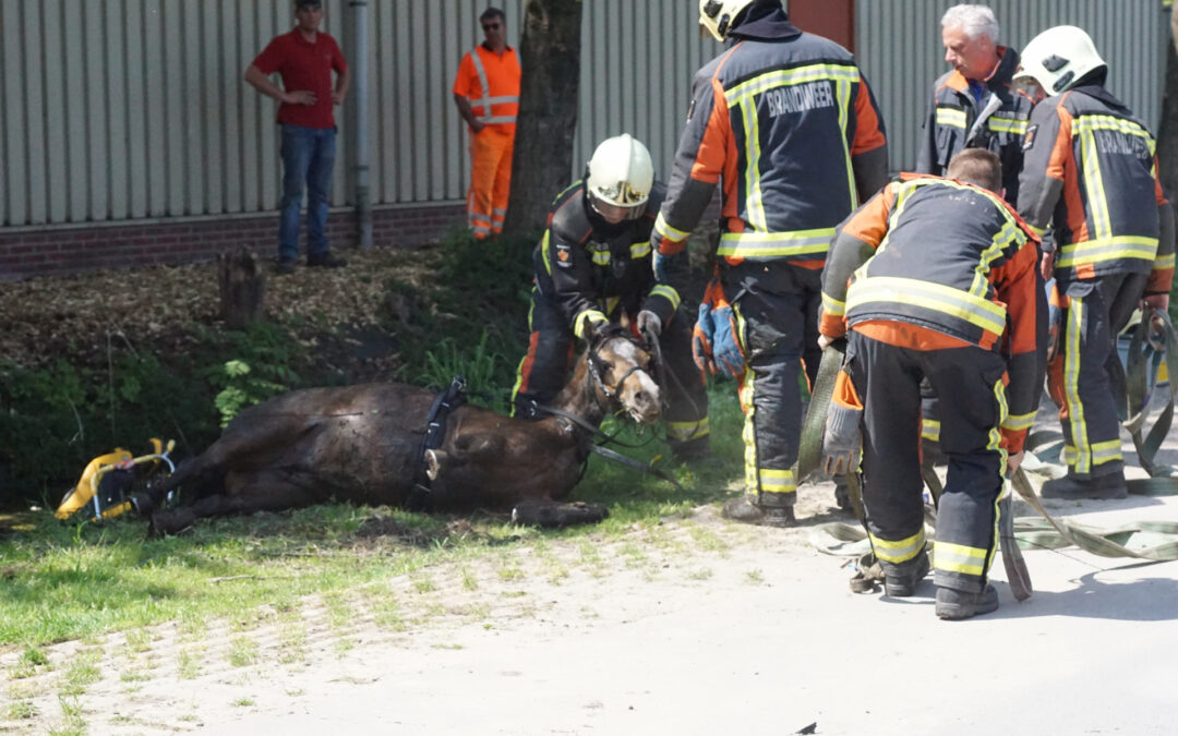 Paard met wagen belanden in sloot Tentweg Stolwijk