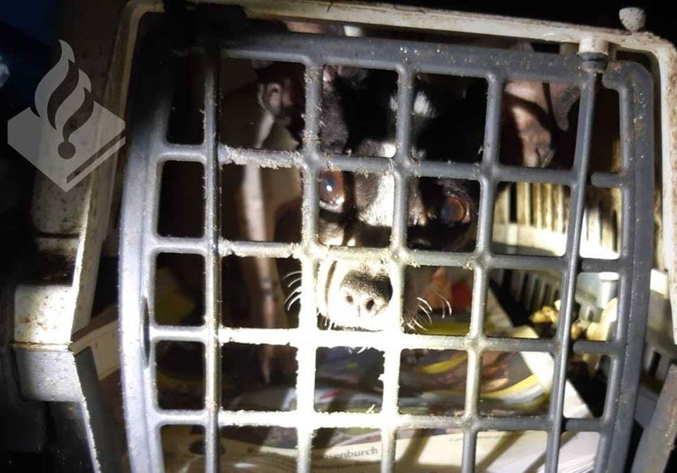 Tientallen dieren uit verwaarloosde Rotterdamse woning gehaald