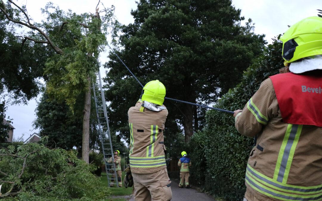 Meerdere gevaarlijk hangende takken verwijderd Concours Krimpen aan den IJssel