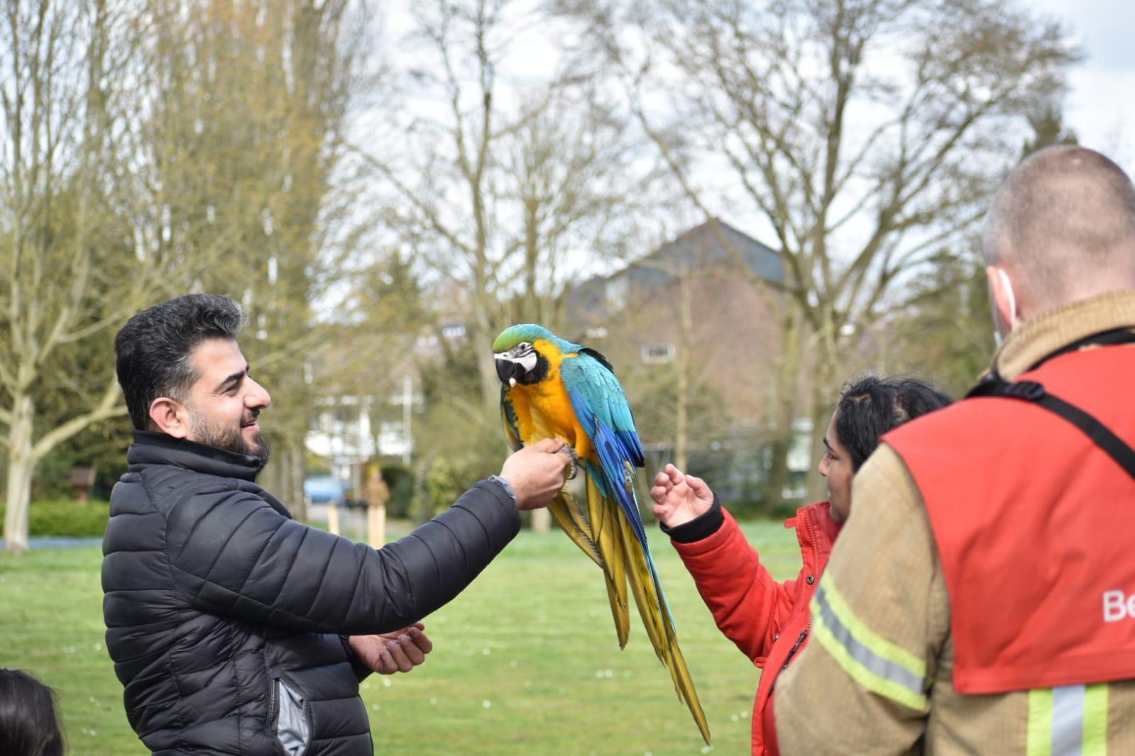 Brandweer haalt papegaai uit boom Peppelweg Rotterdam -.